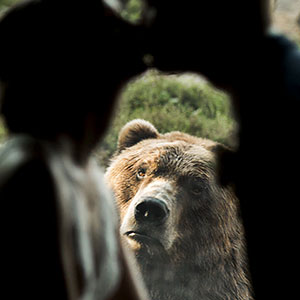 The Internet Is Cracking Up Over This Bear's Reaction To This Couple Getting Married At The Zoo (3 Pics)