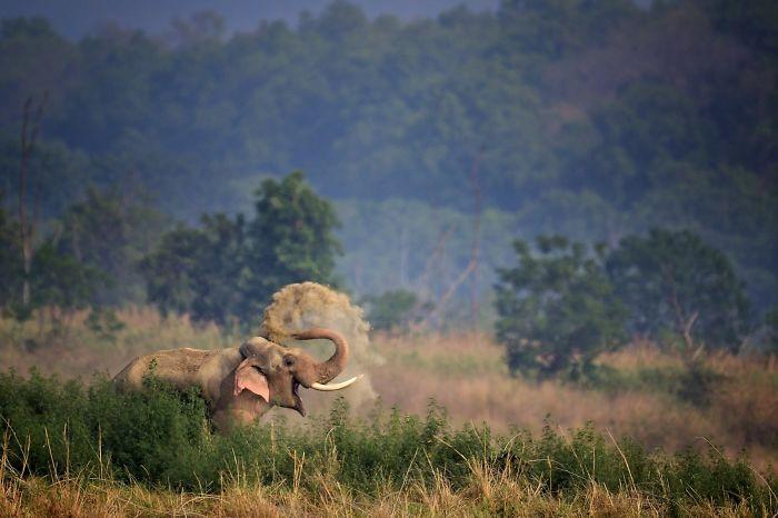 Elefante sonriente