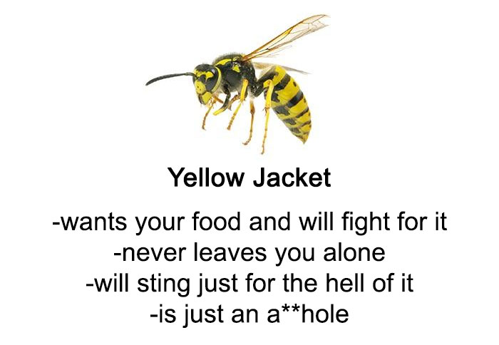 Someone Wrote A Funny Guide About Bees And Wasps And You Might Learn Something New