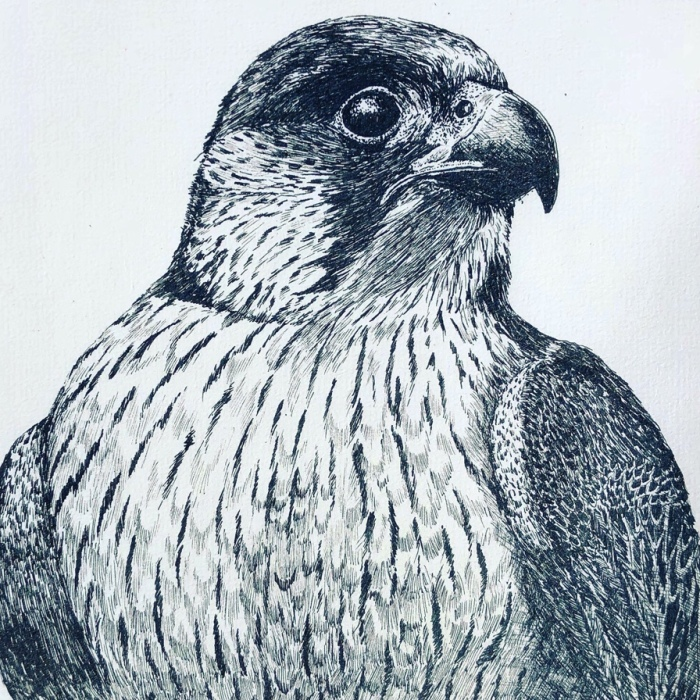 10 Amazingly Detailed Drawings Of Birds And Insects By Bas Geeraets