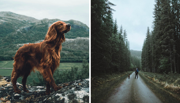 This Human And Dog Love Hiking Together In The Norwegian Wilderness, And Their Pics Are Absolutely Epic