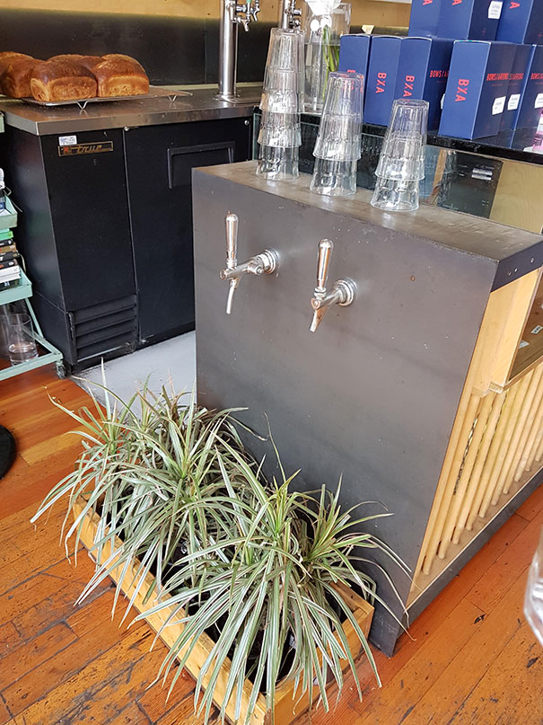 The Water Taps At This Cafe Drip Onto Plants To Not Waste Water