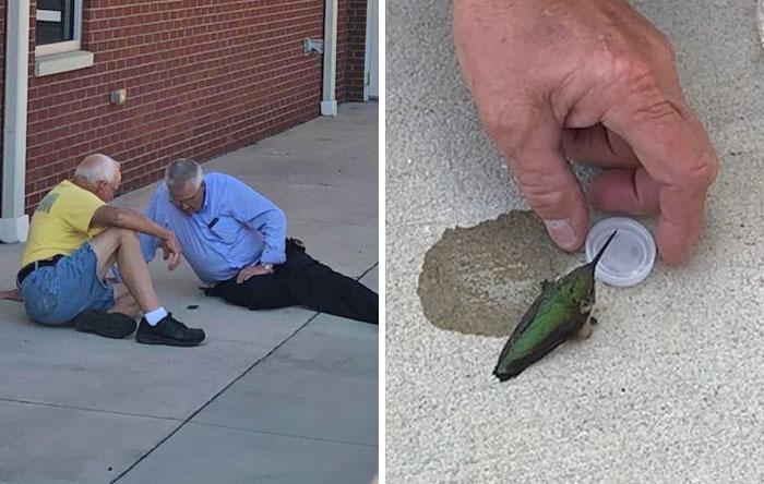 Tras un incendio en Carolina del Sur, alguna gente que fue a ayudar encontró a este colibrí exhausto. Le dieron agua con azúcar y poco después recuperó sus fuerzas y se fue volando