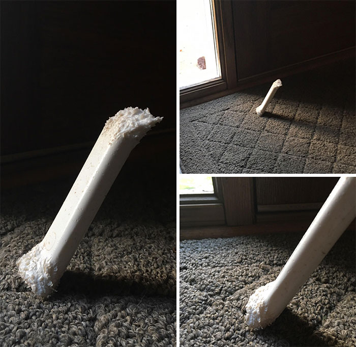 My Dog's Bone Stands Upright Because Of The Way She Chewed It