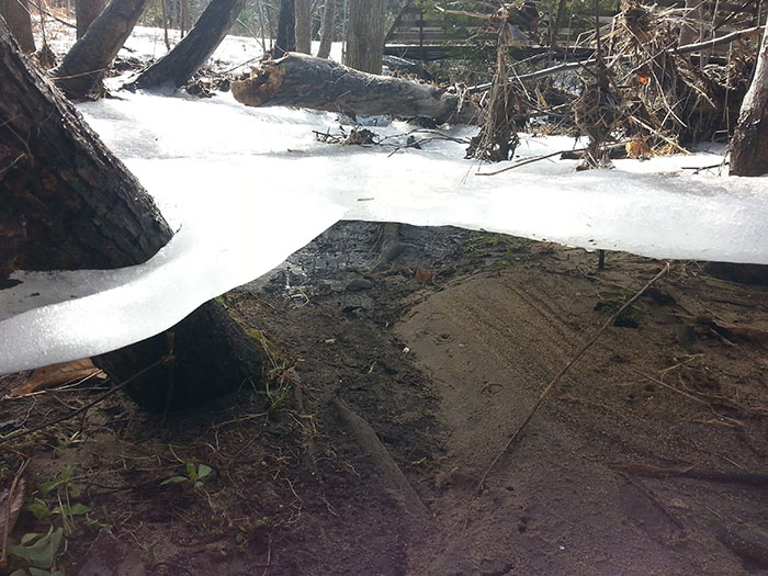Ice Sheet Holding Onto Trees After Flood Subsides
