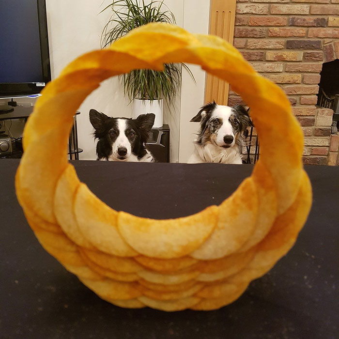 How's This For A Pringle Ringle Border Collie Border?