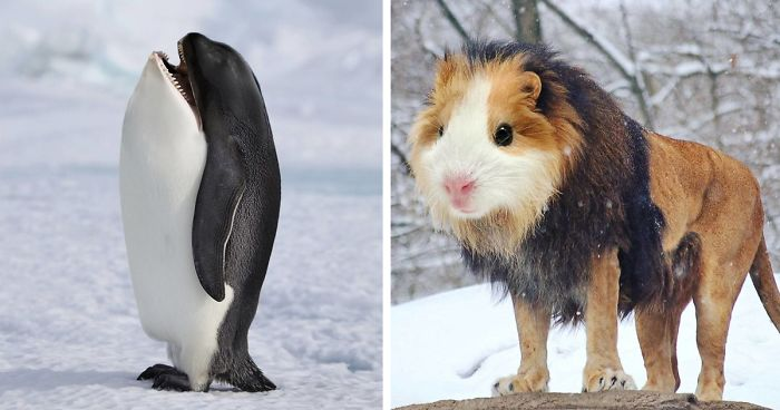 39 Unexpected Animal Hybrids That Would Be Hilarious In Real Life
