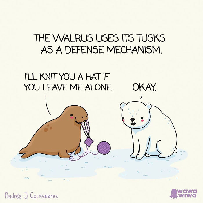 The Walrus Uses Its Tusks As A Defense Mechanism. ... I'll Knit You A Hat If You Leave Me Alone. ... Okay.