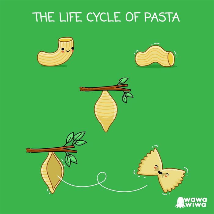 The Life Cycle Of Pasta