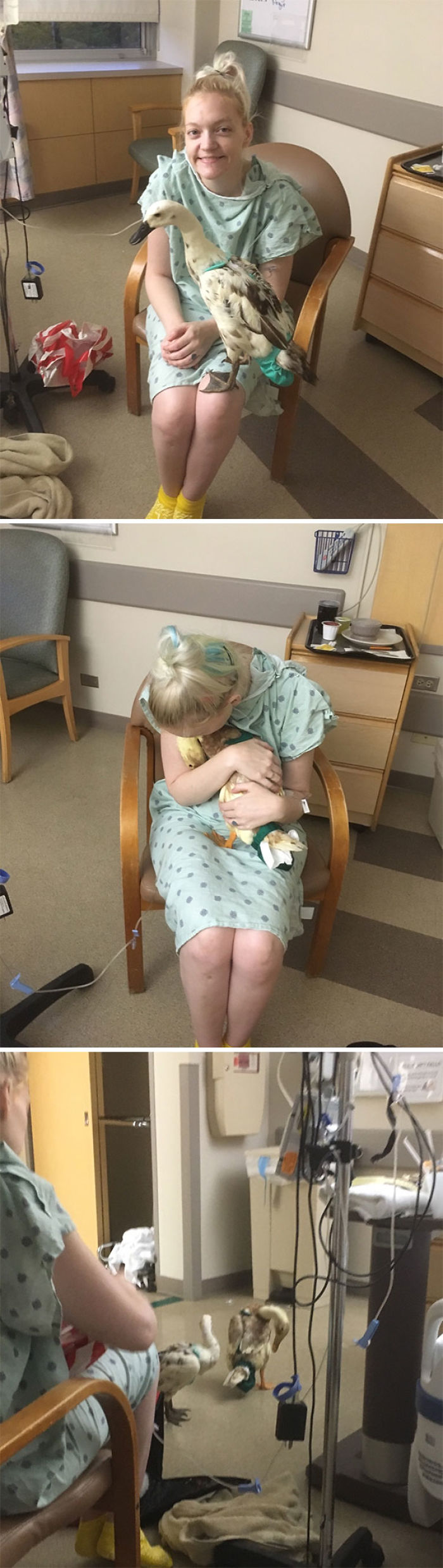 I Didn't Want To Go To The Hospital When I Had Life-Threatening Illness, Because My Elderly Pet Ducks Required Daily Medications At The Time. I'm The Only Person They'll Allow. The Nurses Let My Husband Sneak Them In At Night