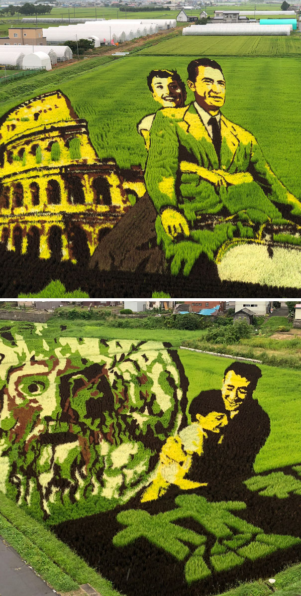 Rice Paddy Art Is An Art Form Originating In Japan Where People Plant Rice Of Various Types And Colors To Create Images In A Paddy Field