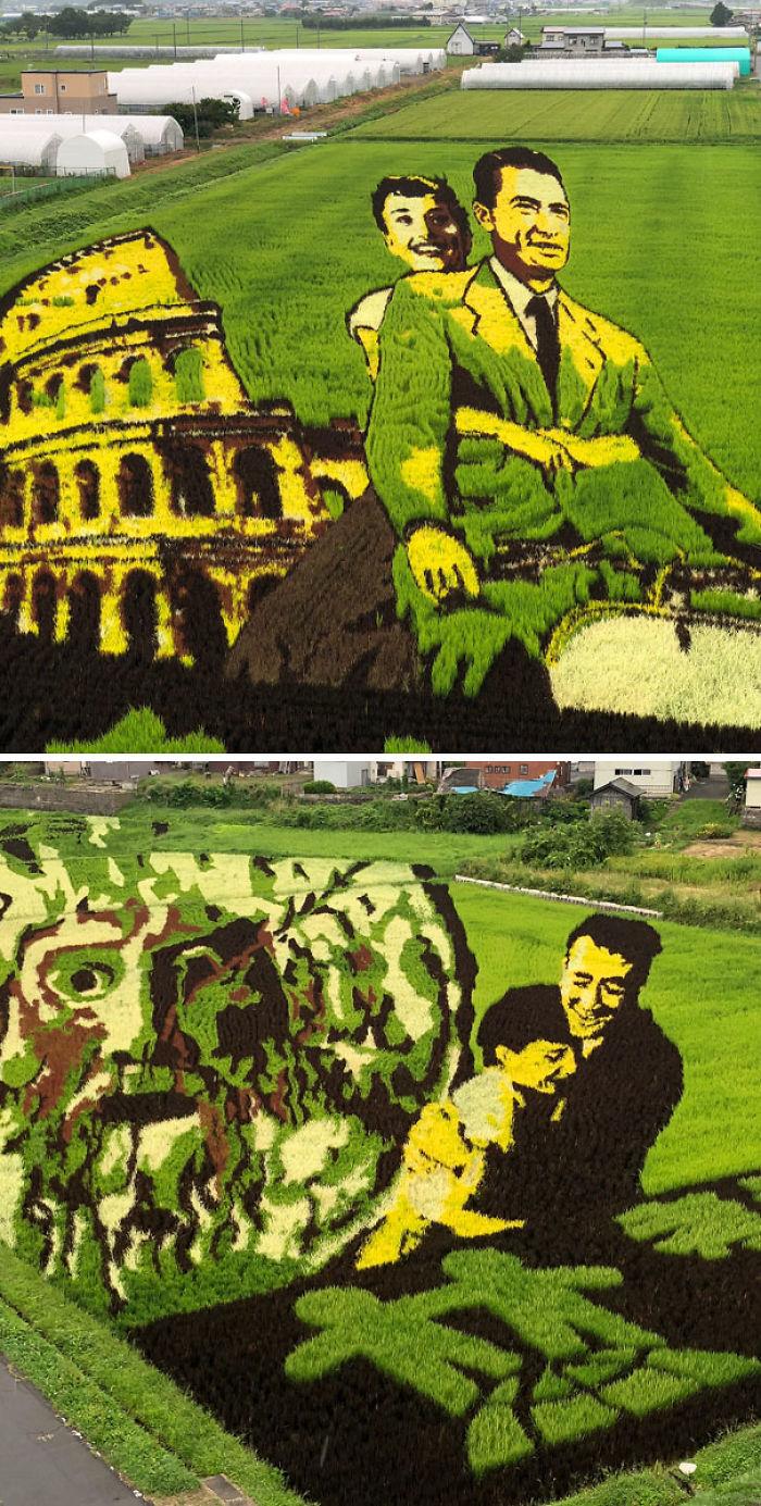 El Arte En Los Campos De Arroz Es Una Forma De Arte Originaria De Japón, Donde La Gente Planta Arroz De Varios Tipos Y Colores Para Crear Imágenes En Un Campo De Arroz