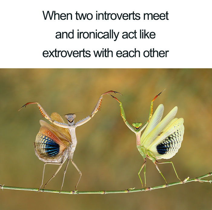 Funny-Introvert-Meme