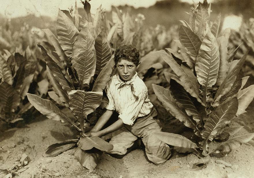 10 Yr. Old Picker On Gildersleeve Tobacco Farm. Location: Gildersleeve, Connecticut