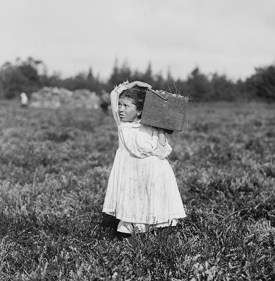 Eight-Year-Old, Jennie Camillo, Lives In West Maniyunk, Pa. For This Summer She Has Picked Cranberries. Location: Pemberton, New Jersey