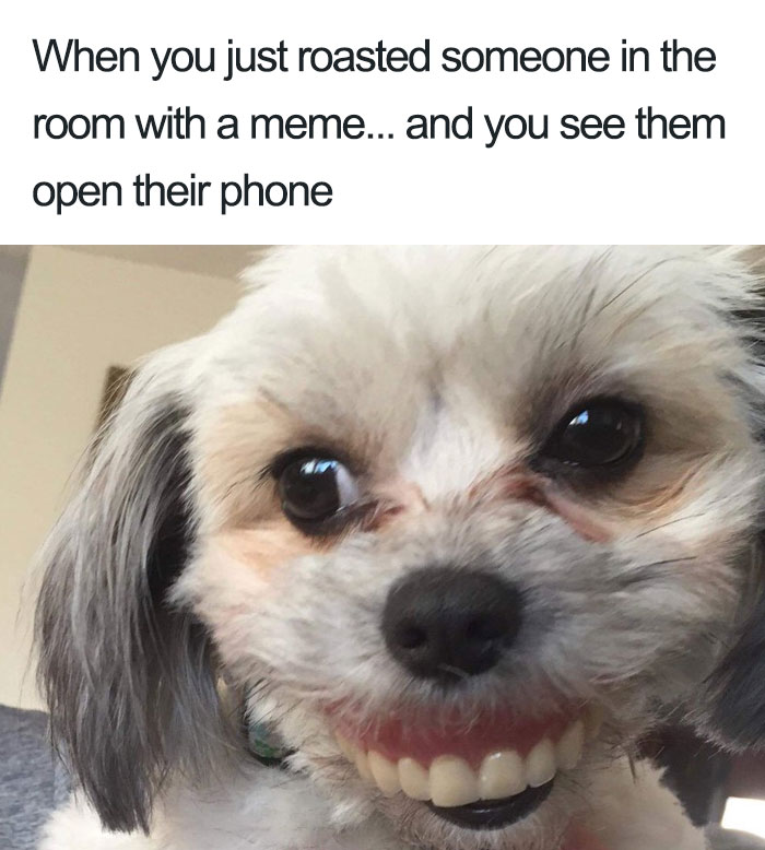 Dog Steals Owner's Dentures While He Sleeps, Hilarity Ensues