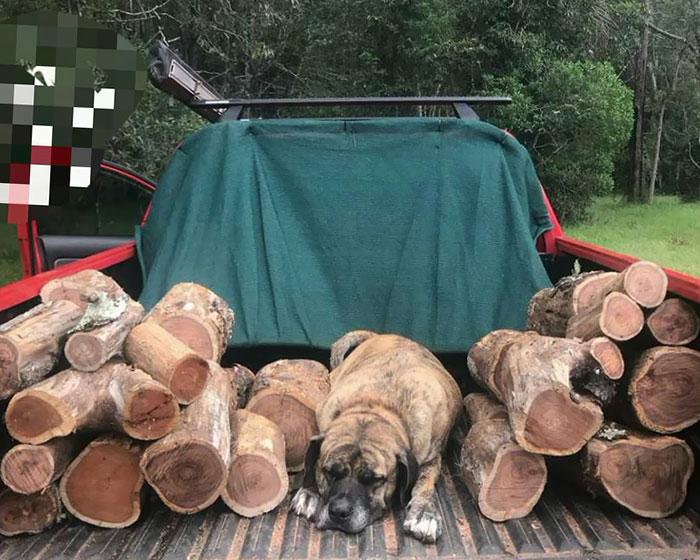 Dog Or Log?