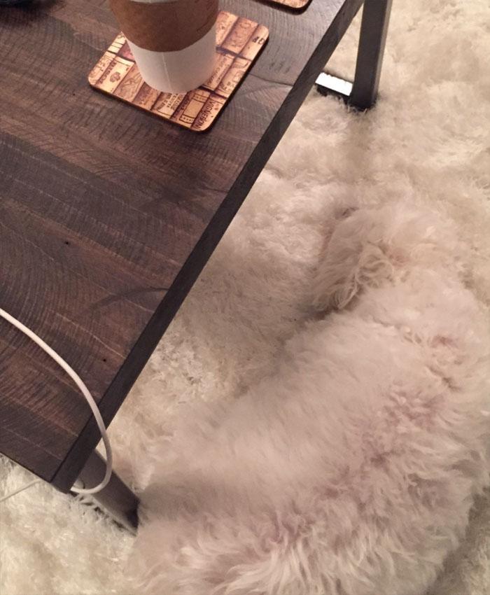 My Dog's Urban Camouflage