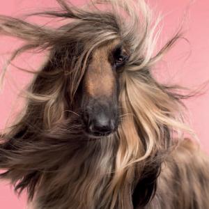 Fotograf stellt Hunde und Ihre Besitzer gegenüber und Ihre Ähnlichkeit ist verblüffend