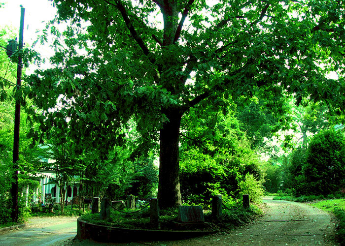 This City Granted The Right For This Tree To Own Itself And It's Brilliant