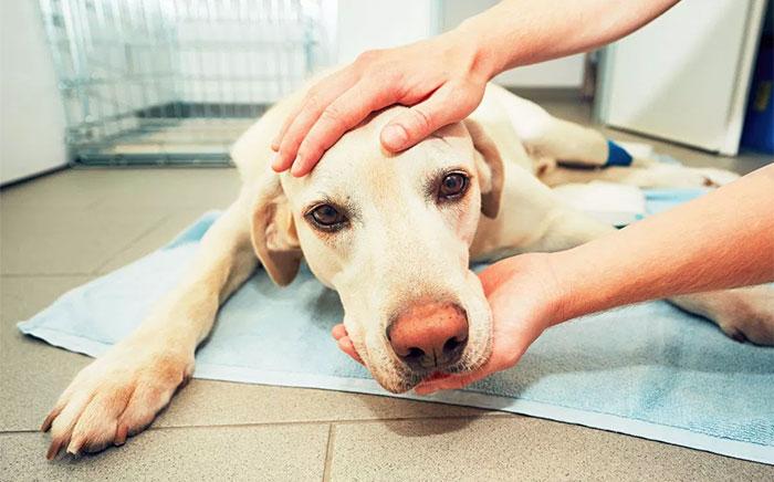 Los veterinarios cuentan lo que hacen las mascotas antes de morir, y todo dueño debería leerlo