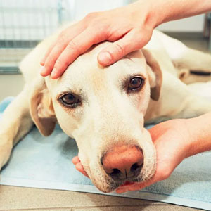 Vets Reveal What Pets Do Right Before Death, And It's A Must-Read For Every Pet Owner