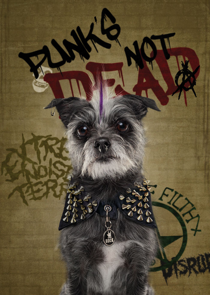 Punk's Not Dead….she's Just Been Sleeping