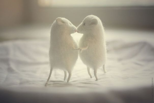 You Will Forgive Them Again And Again: Extremely Cute Mice With A Heartwarming Look