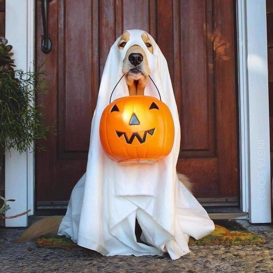 13 Adorable Dogs In Ghost Costumes