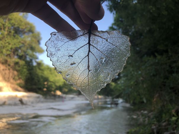 I Found A Transparent Leaf
