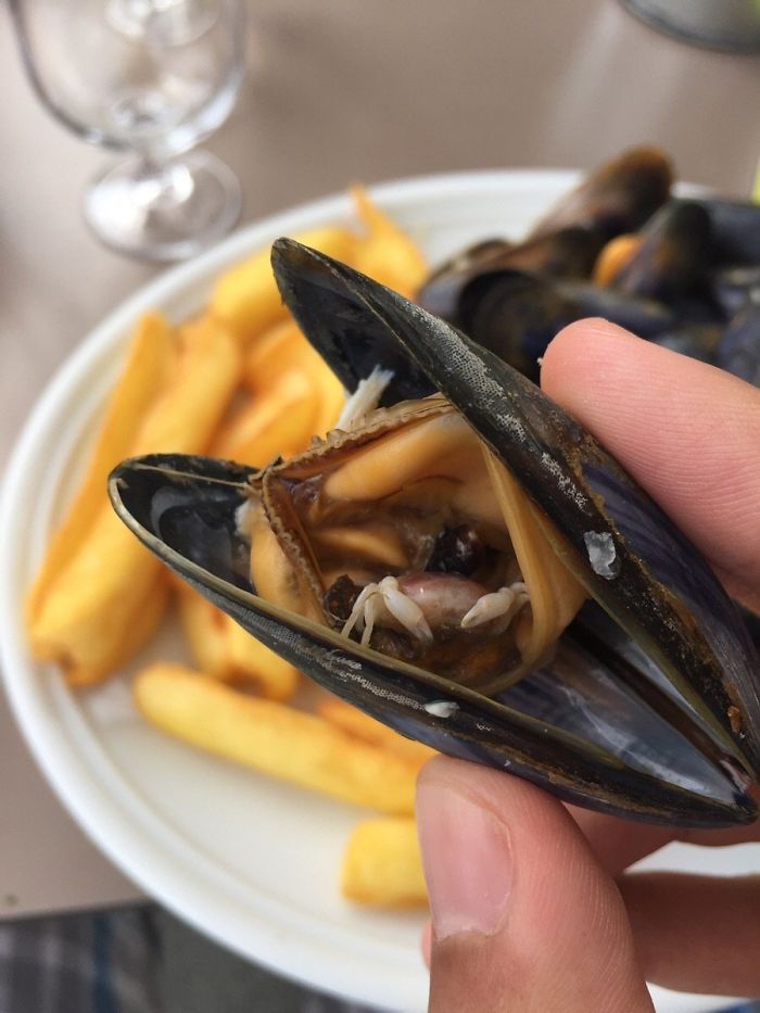 My Mussel Contained A Tiny Half-Eaten Crab!