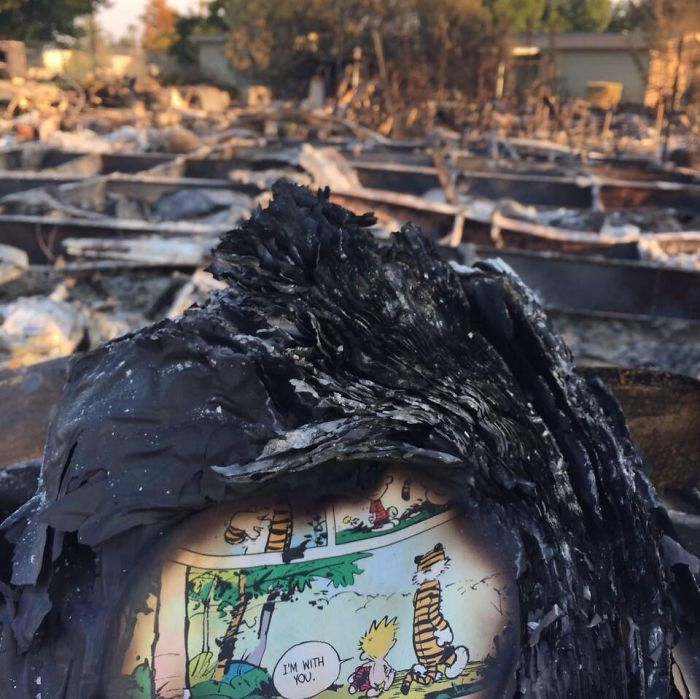 This Was Found In A Santa Rosa Neighborhood That Was Completely Burned To The Ground