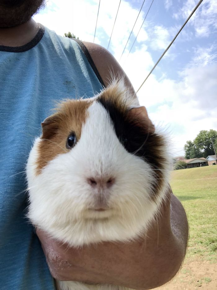 Found A Guinea Pig That Was Abandoned In The Woods While I Was Playing Disc Golf. She Has A New Home Now