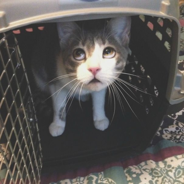 That Face When Your Cat Doesn't Wanna Go Outside The Carrier At Vet