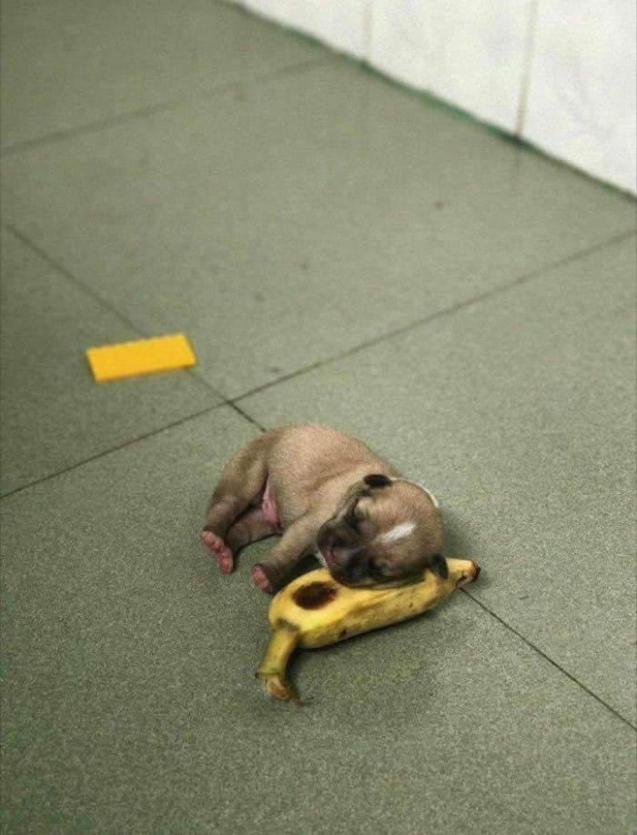 И еще чуть-чуть няшных щенков  :-)
