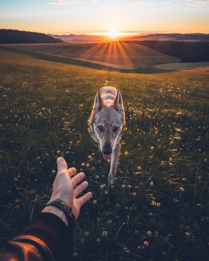 Tired Of #FollowMeTo Instagram Pics? This Guy Pets His Dog Everywhere He Goes, And It's 1000 Times Better