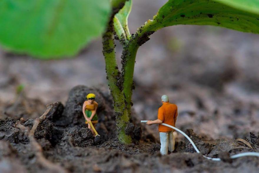 Microgardening