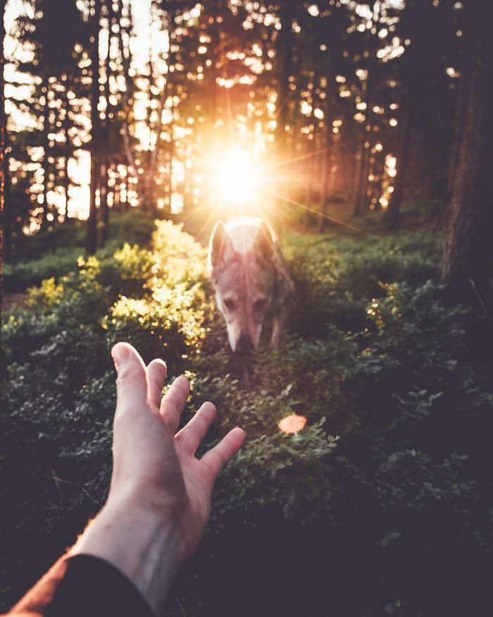 Good Boy Dog Photos