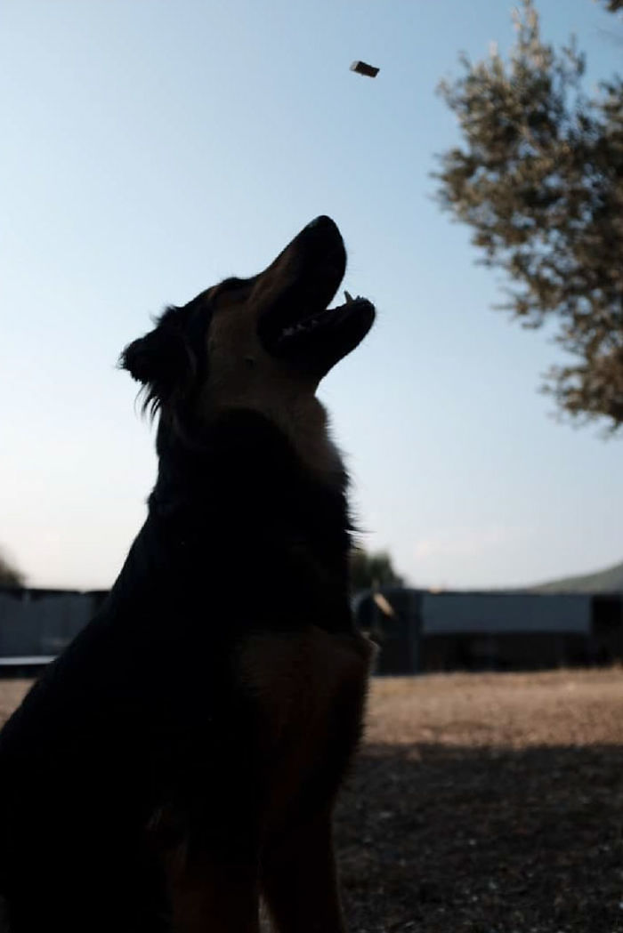 I Photograph Street And Shelter Dogs