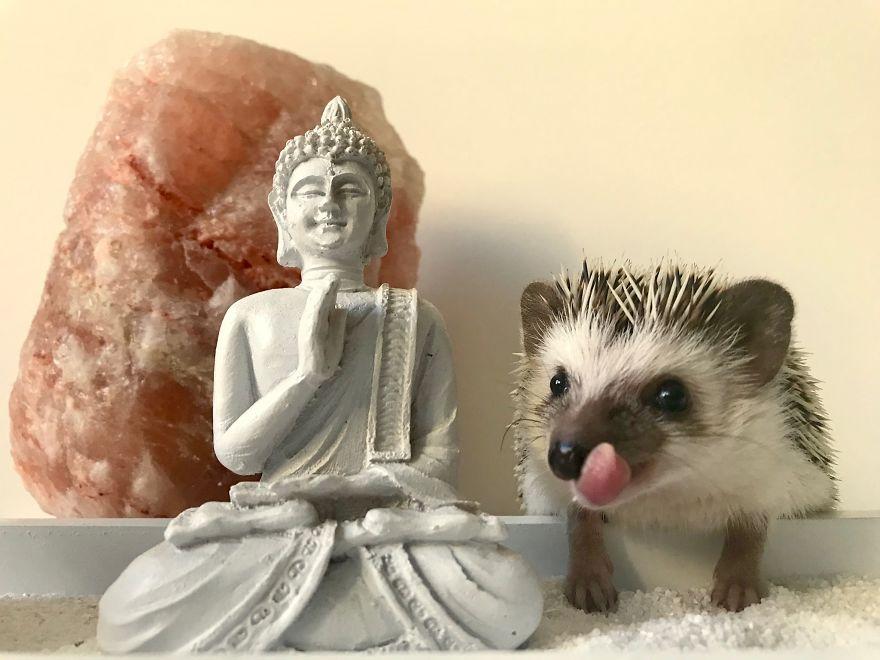 A Little Buddhist