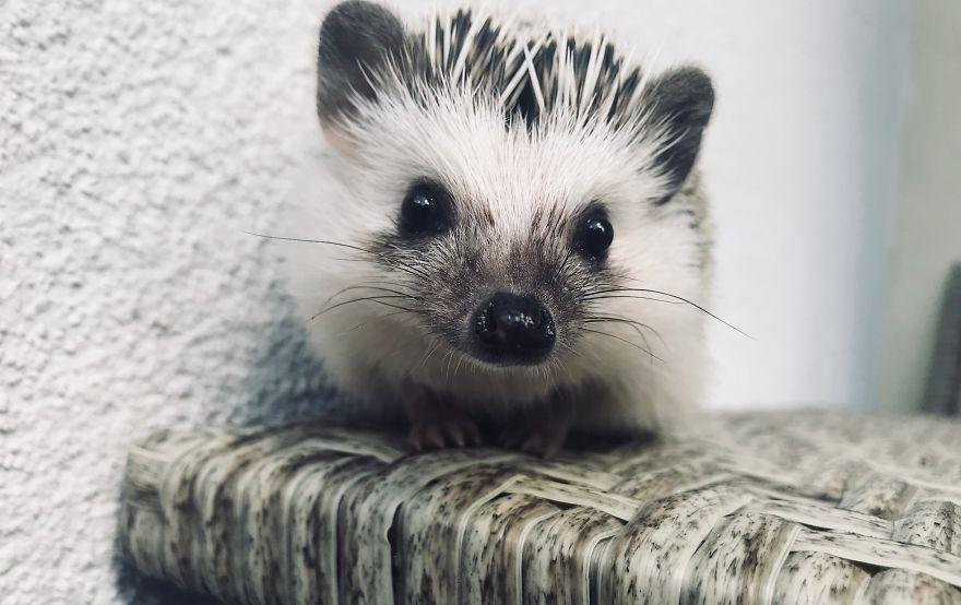 Hello, Little Nose