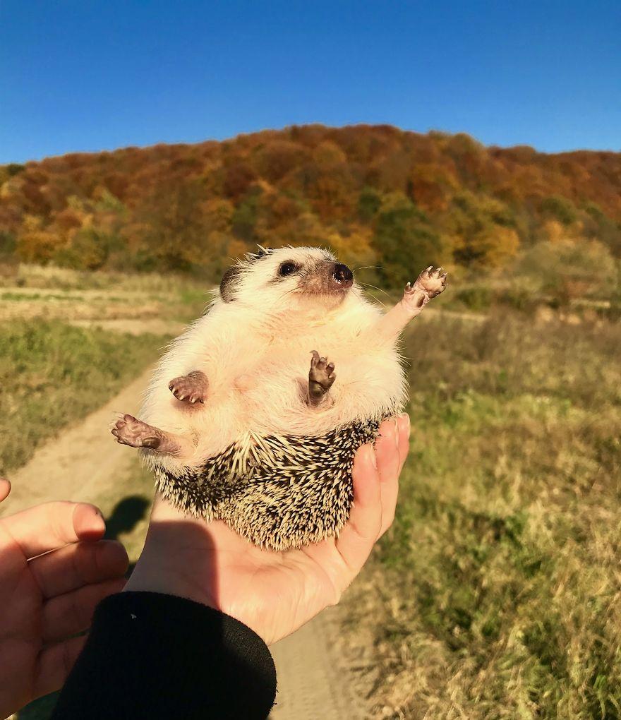 """""""Hello, Fall"""""""