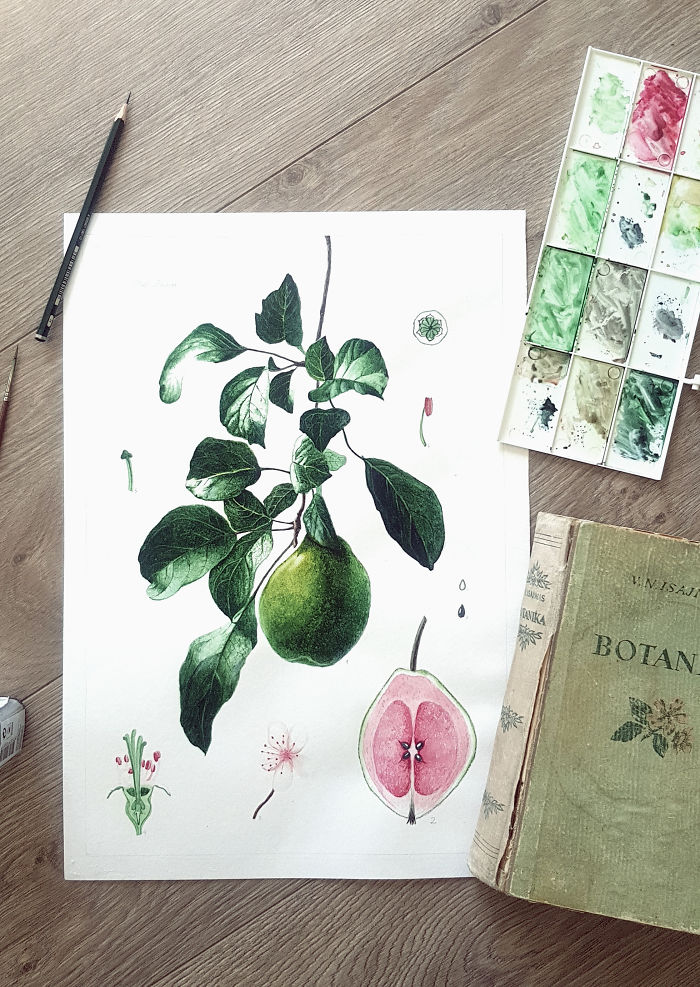 Lithuanian Guava (Non Existing Plant)