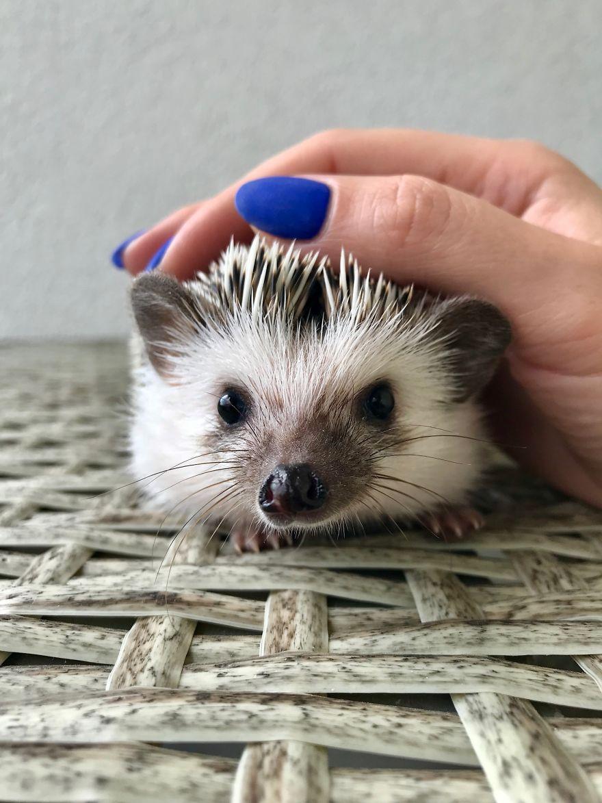 Tiny Hedgy Baby