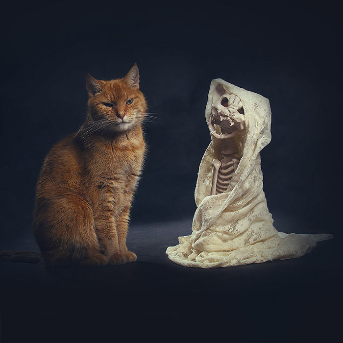 I Photograph Animals Every Halloween
