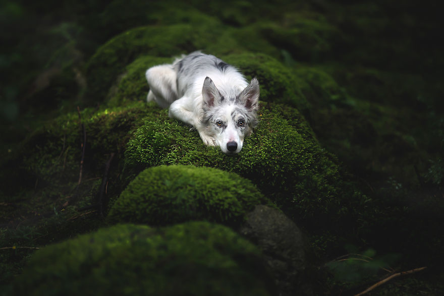 Soulful Portraits Of Dogs In Breathtaking Landscapes