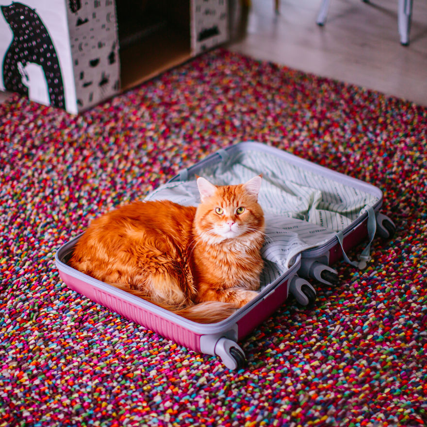 The Cutlet Cat - What Happens If You Are A Bright Red Inspirer