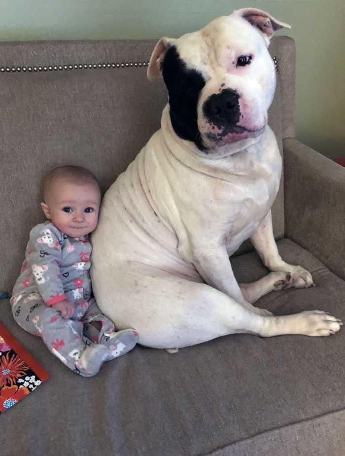 My Moms Rescue Dog Rico Is Best Friends With My Baby. I Interrupted Them Watching Peppa Pig