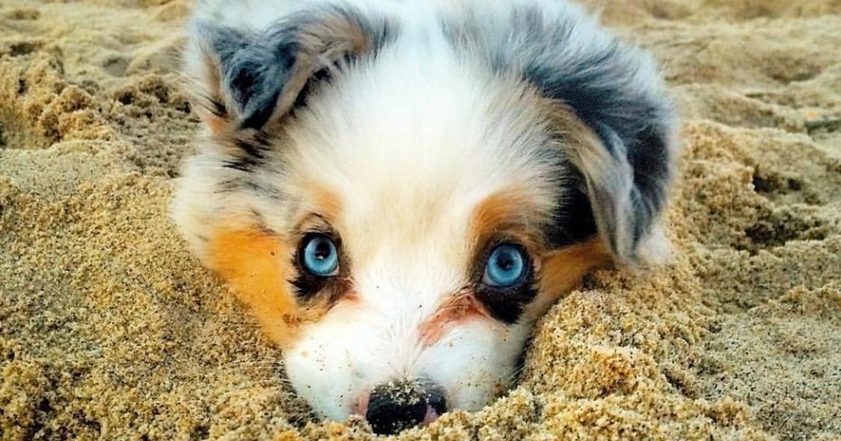80 Of The Cutest Puppies Ever
