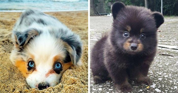 80+ Of The Cutest Puppies Ever